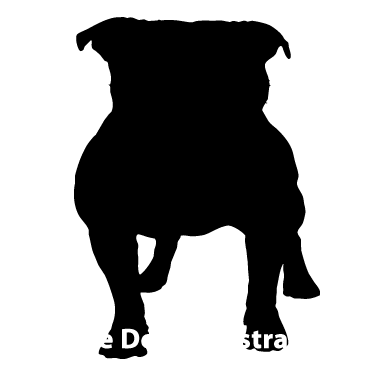 375x375 Register Your Pug Dutch Mastiff With The American Bully Association