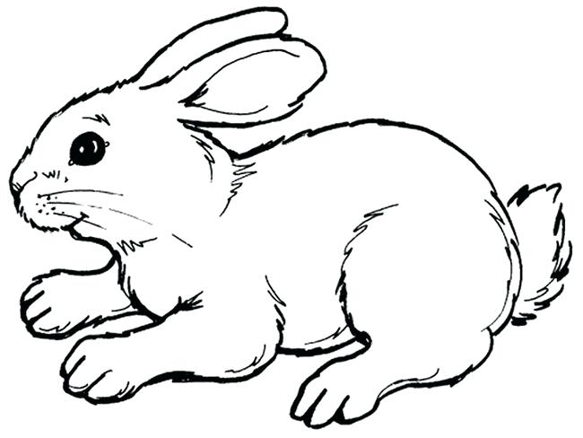 650x488 Bunny Outline Rabbit Drawing Outline Bunny Outline Vector