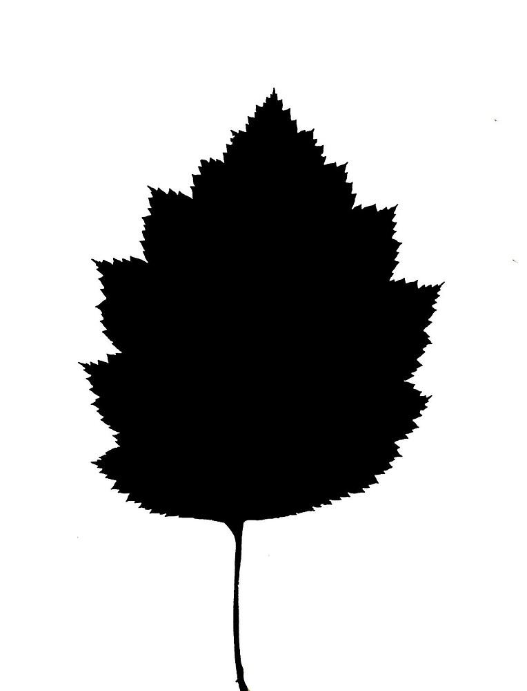 764x1000 Crataegus Coccinea (Scarlet Hawthorn) Go Botany