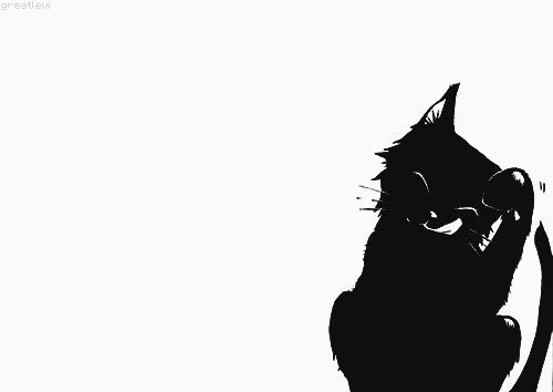 500x354 Black Butler Funny Cute Adorable Nice Black Cat Manga Cat
