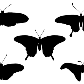 340x340 Butterfly Silhouette Vectors Download Free Vector Art