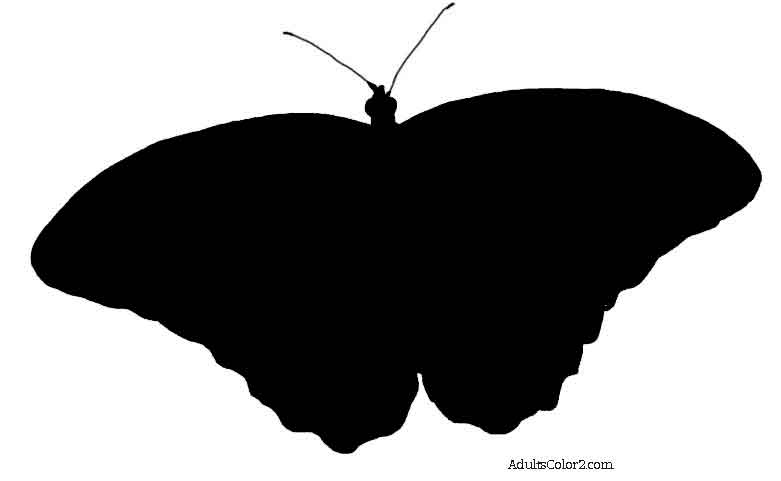 781x481 Butterfly Outline Or Silhouette Basic Butterfly Shapes