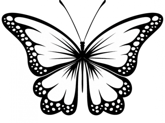 670x500 Butterfly Tattoos Tattoos Butterfly, Tattoo
