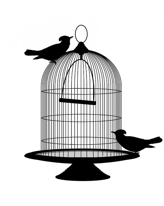 576x720 Free Photo Vintage Cage Black Birdcage Birds Bird Silhouette