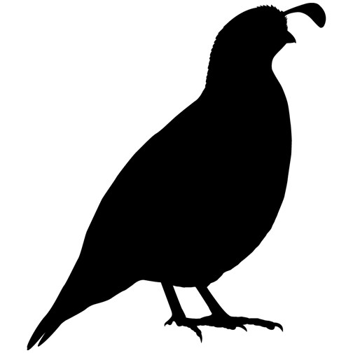 504x504 California Quail Vinyl Wall Decal By Wilsongraphics On Etsy