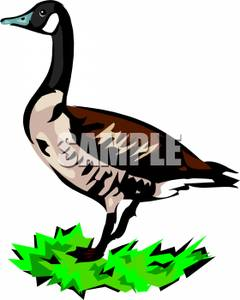 240x300 Canada Goose Silhouette Clip Art. Download Free Versions