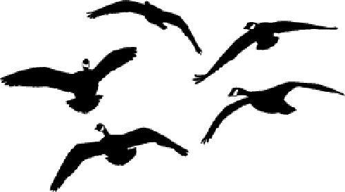 500x278 Honkers (Front) Goose Decal Goose Sticker Goose Hunting Waterfowl