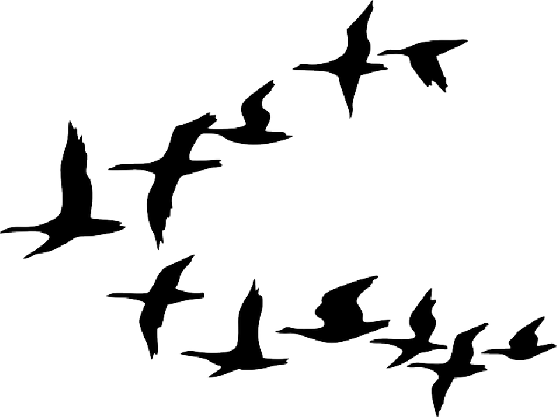 800x600 Black, Outline, Canada, Drawing, Silhouette, White