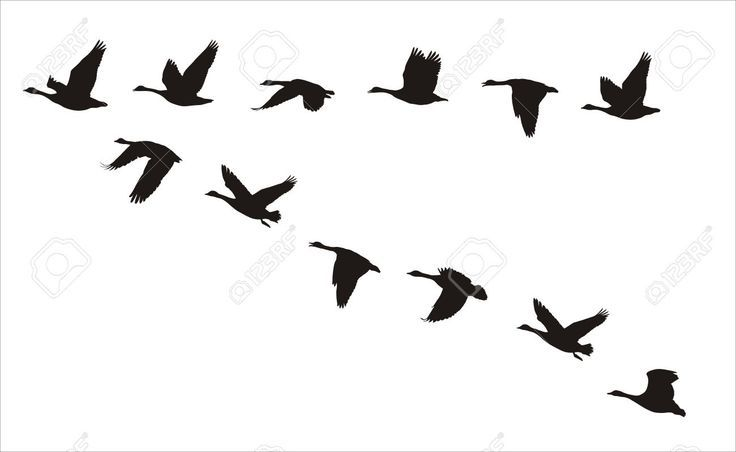 736x452 Canada Goose Silhouette