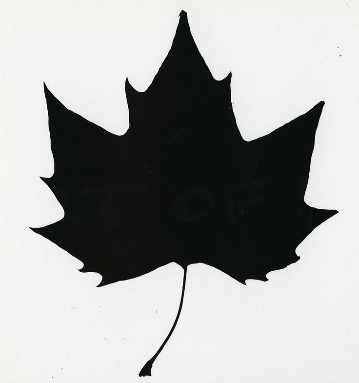736x785 Maple Leaf Clipart Silhouette