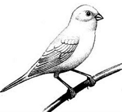 252x232 Free Canary Cliparts, Hanslodge Clip Art Collection