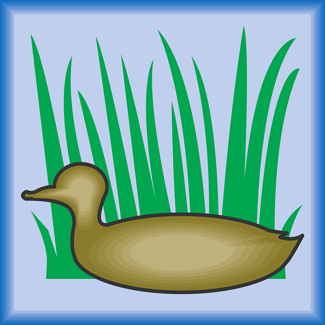 640x640 Free Pictures Bird