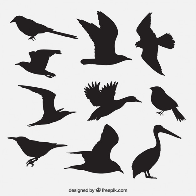 626x626 Sparrow Vectors, Photos And Psd Files Free Download