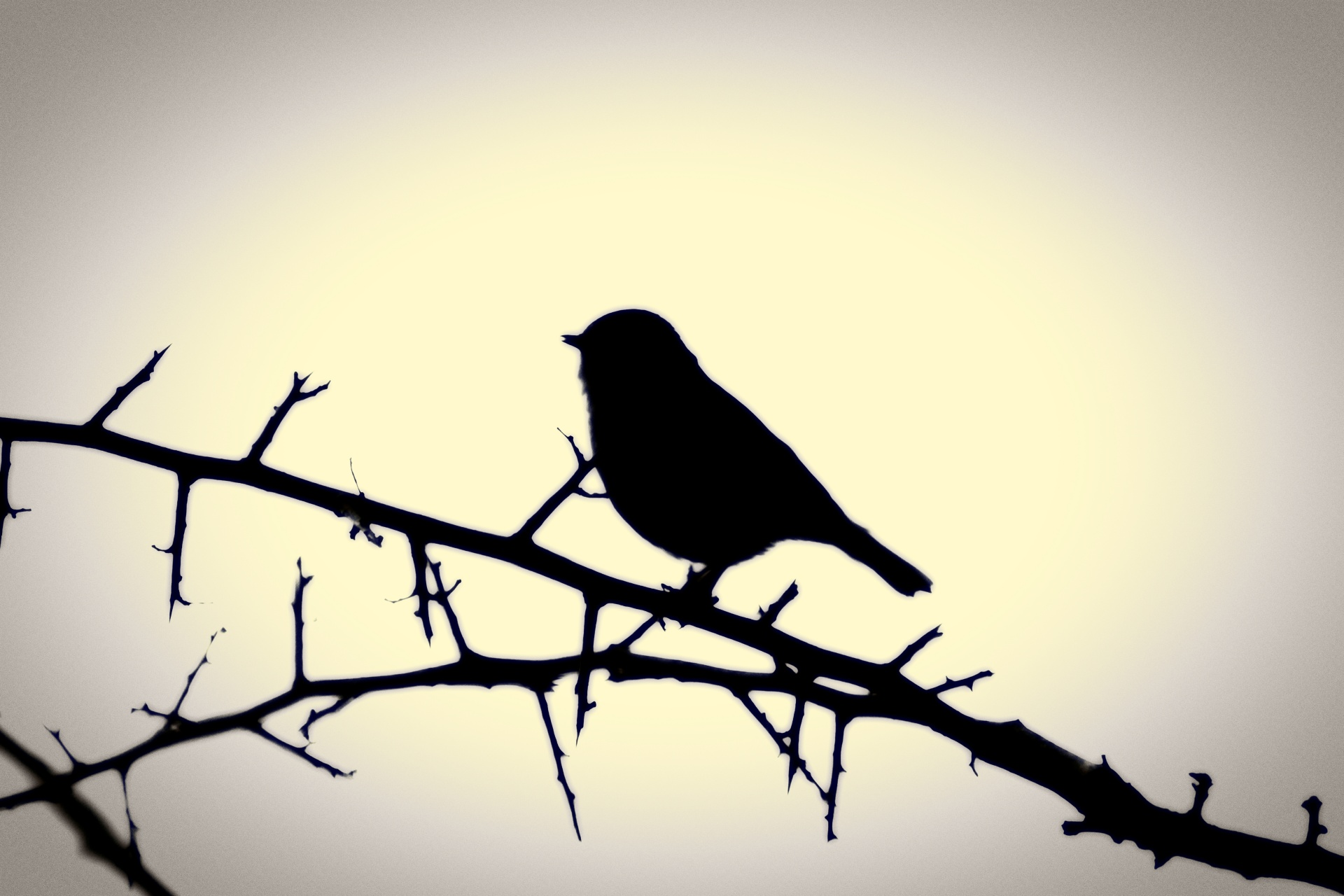 1920x1280 Silhouette Of A Bird On A Branch Free Stock Photo
