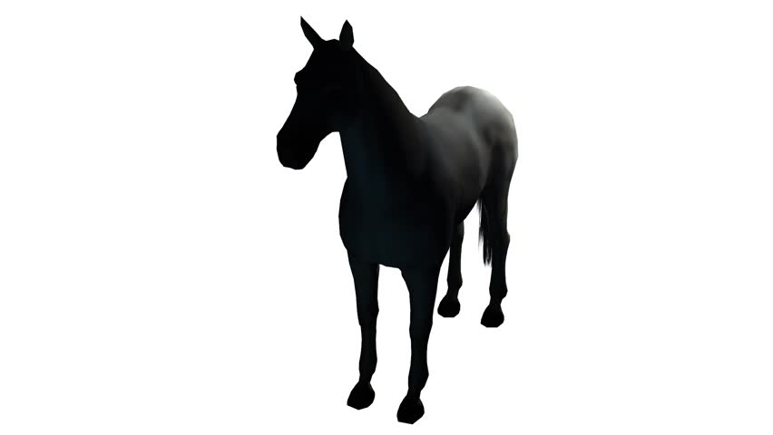 852x480 Black Horse Foal Pet,farm Animal Wild Life Silhouette Profile