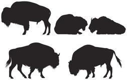 253x160 Buffalo Clipart Buffalo Herd Clipart