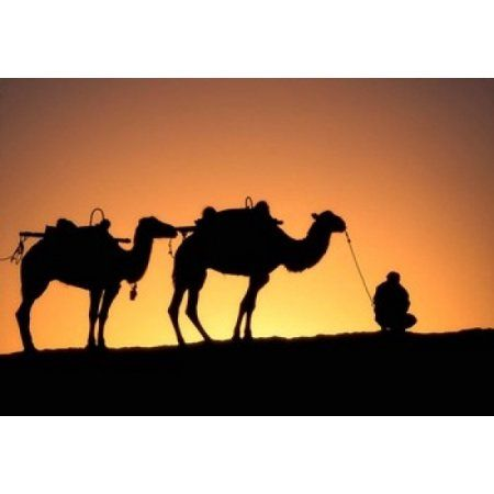 450x450 Camel Caravan Silhouette