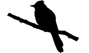 300x180 Bird Id Skills Size Amp Shape All About Birds