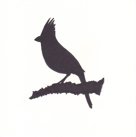 580x581 Birds Without Borders Rachelle Vasquez