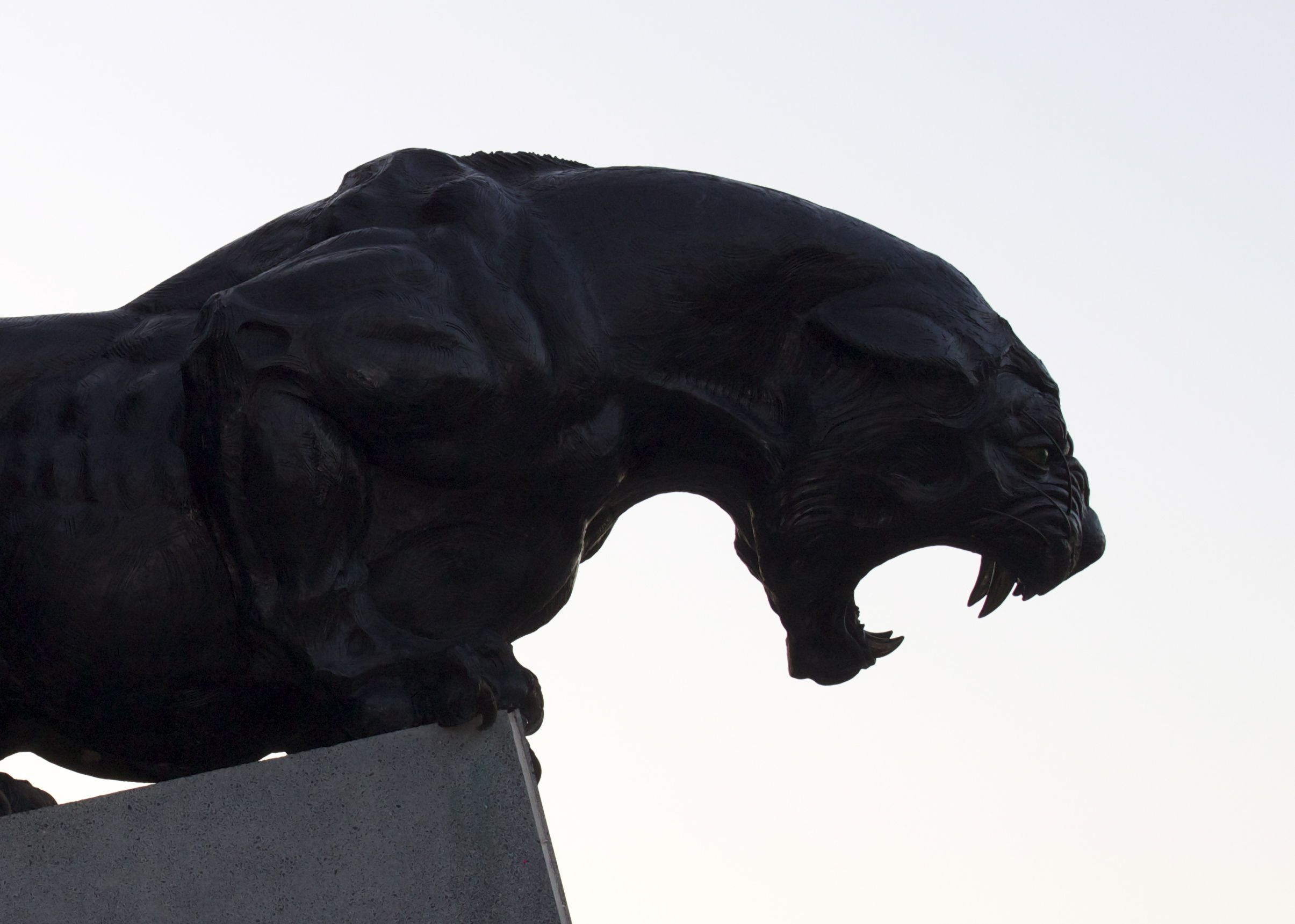 2410x1721 Silhouette Of One Of The Panthers Standing Guard