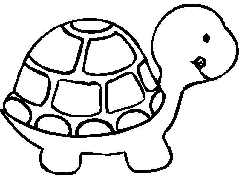 800x600 Printable Turtle Teacher Turtle, Kids Colouring