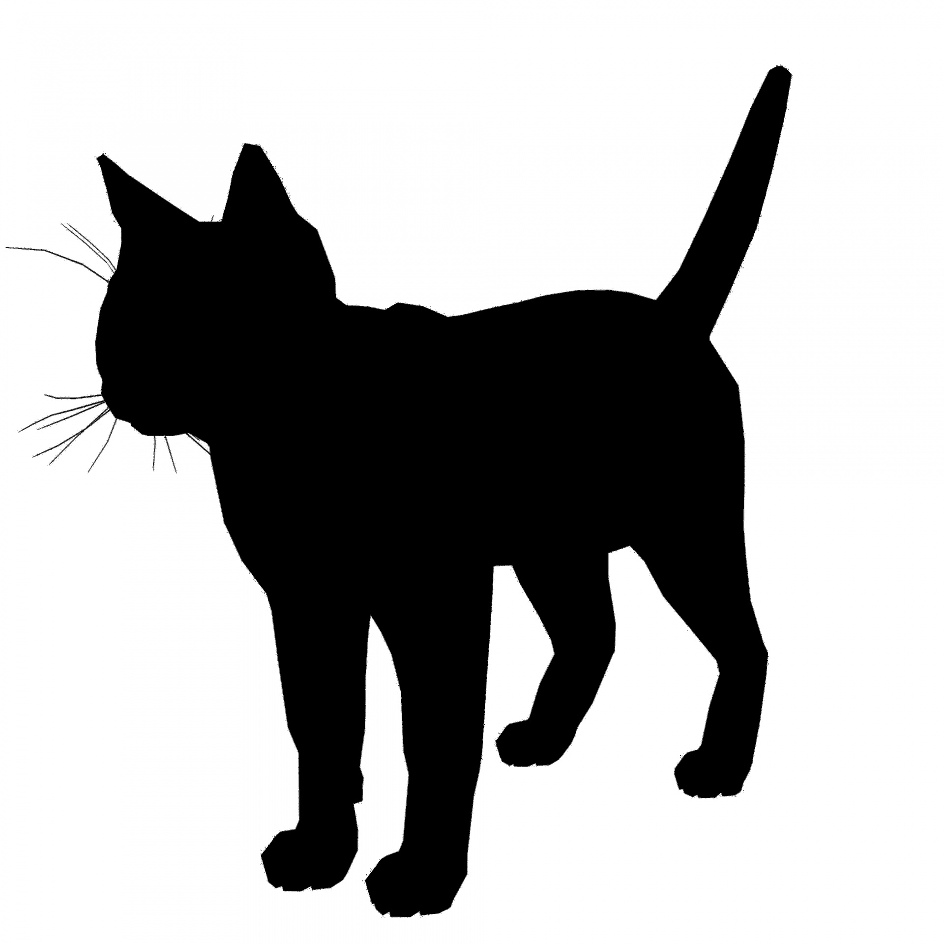 1920x1920 Cat Silhouette Free Stock Photo
