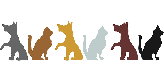 640x320 Animals, Cat, Silhouette, Dog, Pets, Colors, Animal