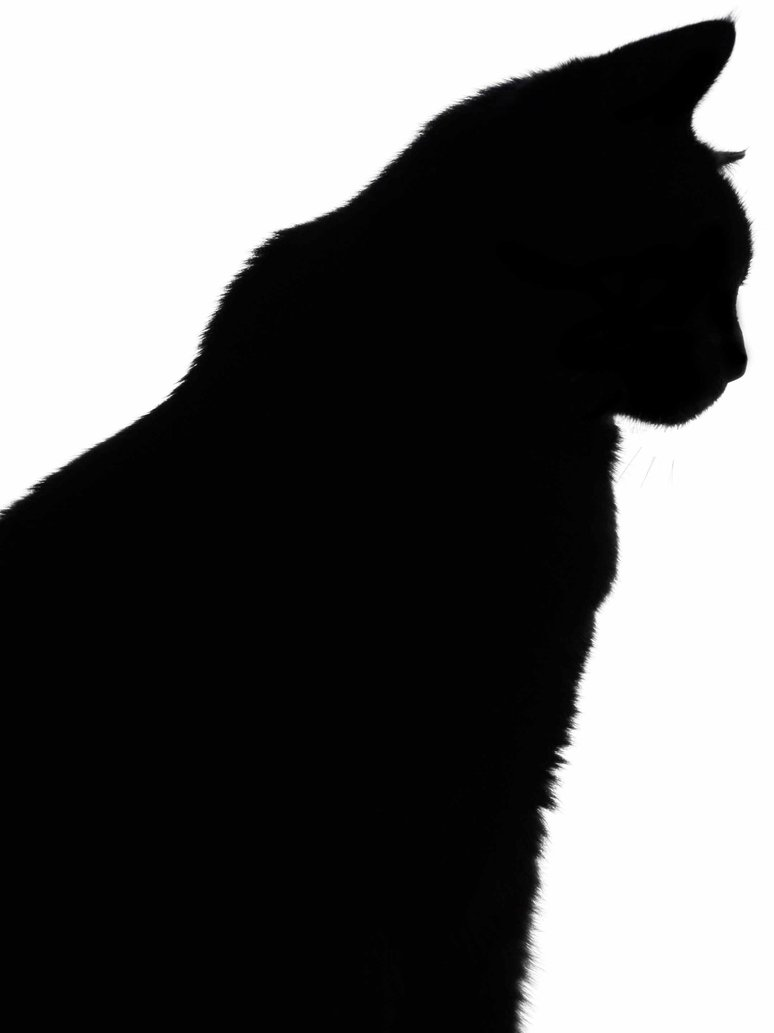 774x1033 Black Cat Silhouette By Miztiry