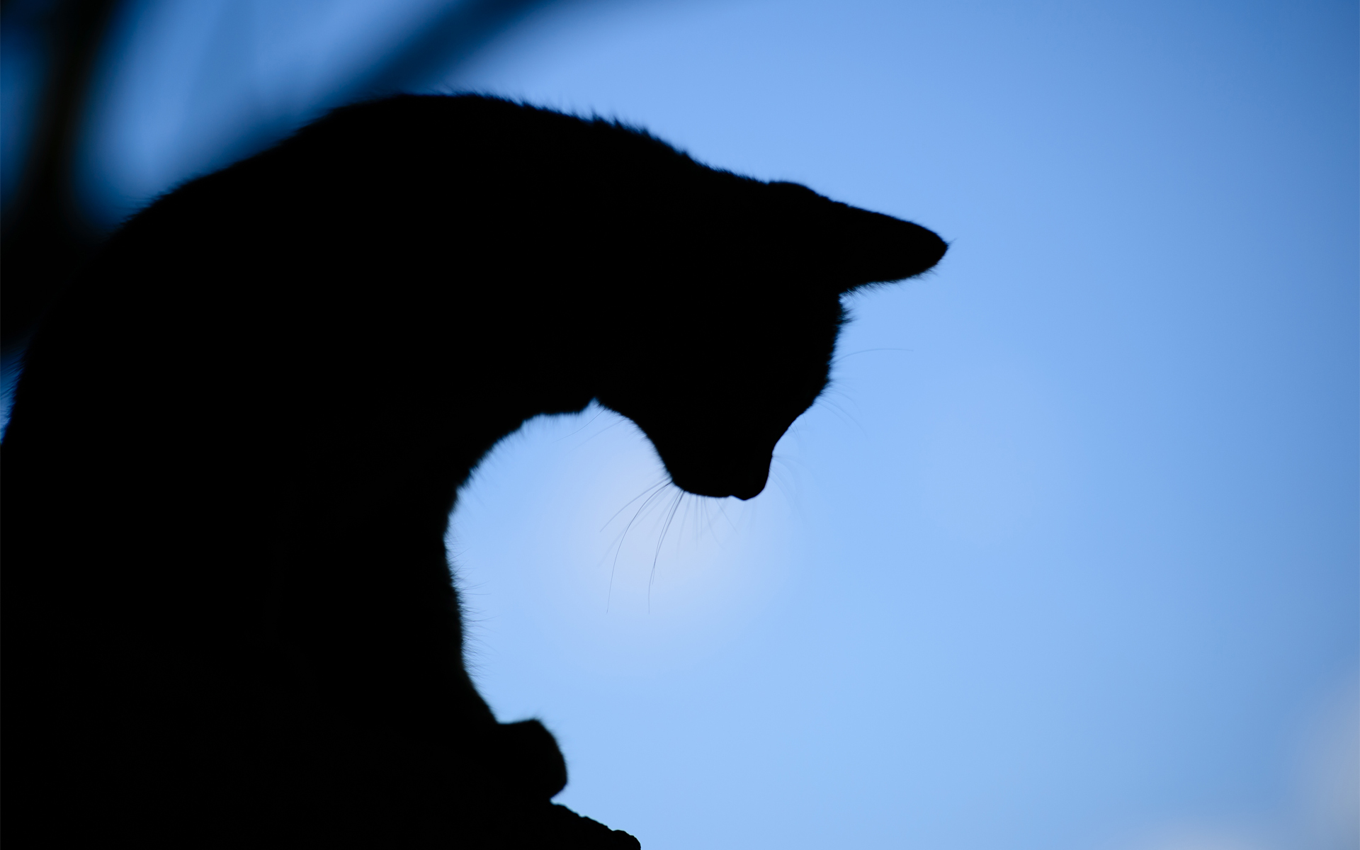 1920x1200 Cat Full Hd Wallpaper And Background Image 1920x1200 Id439084