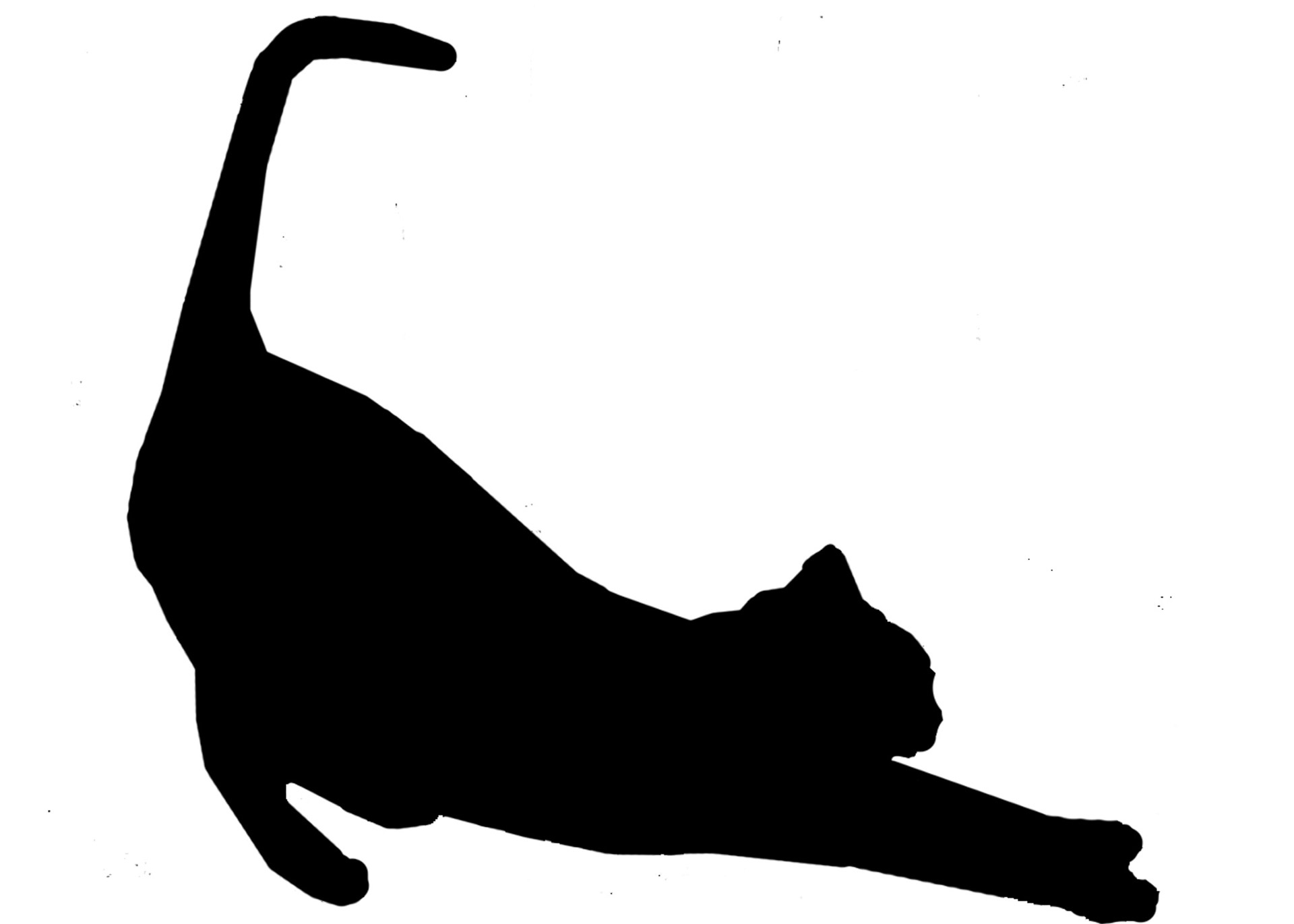 1920x1371 Cat Stretch Silhouette In Black Free Stock Photo
