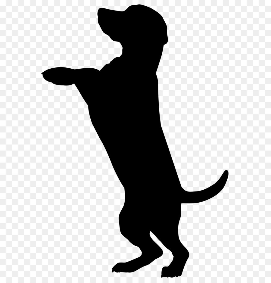900x940 Boxer Dobermann Cat Pet Sitting Silhouette