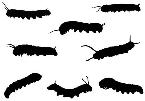 502x352 Caterpillar Silhouette Vector Graphics Vector Graphics