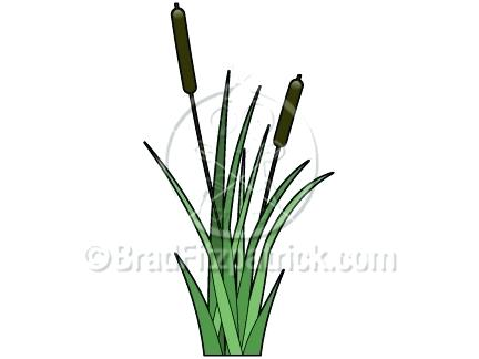 432x324 Cat Tail Plant Clip Art Scenery Cattail Gardenia Perfume Coolman