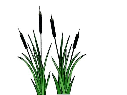 cattails silhouette at getdrawings com free for personal use rh getdrawings com cattails clip art realistic
