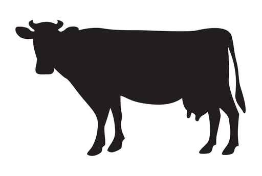 512x345 Cow Silhouette Isolated On White Wall Decal Wallmonkeys