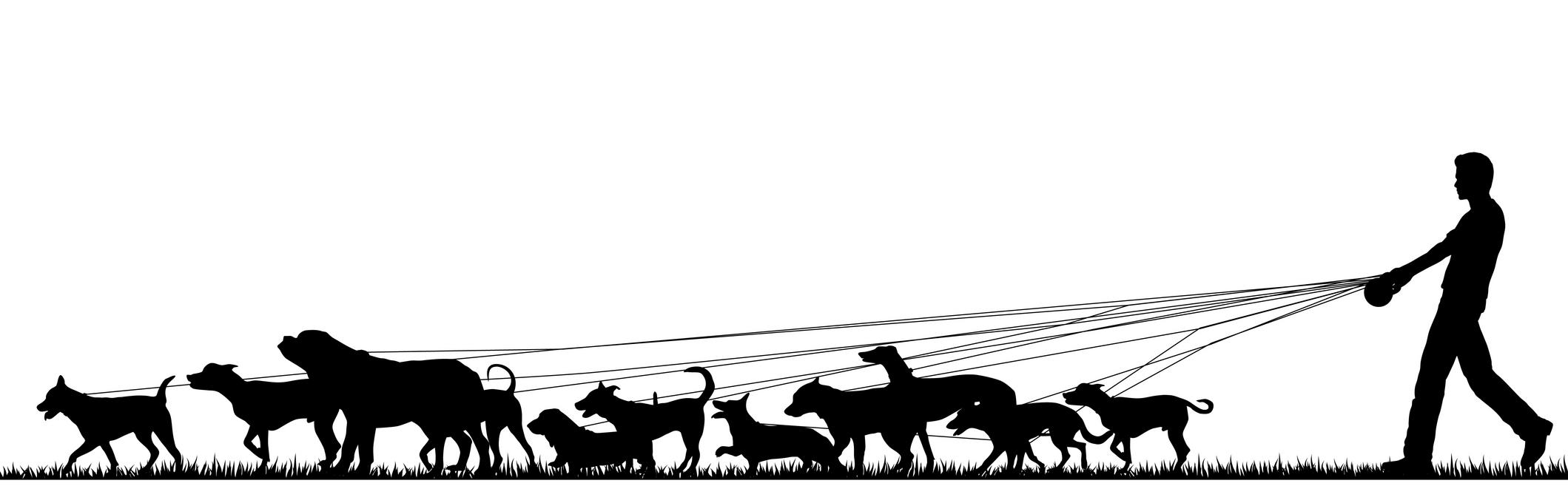 2119x661 Dog Walker In Sandton