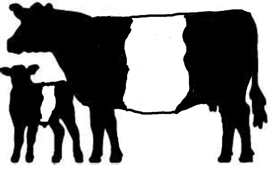 897x567 Cattle Clipart Heifer