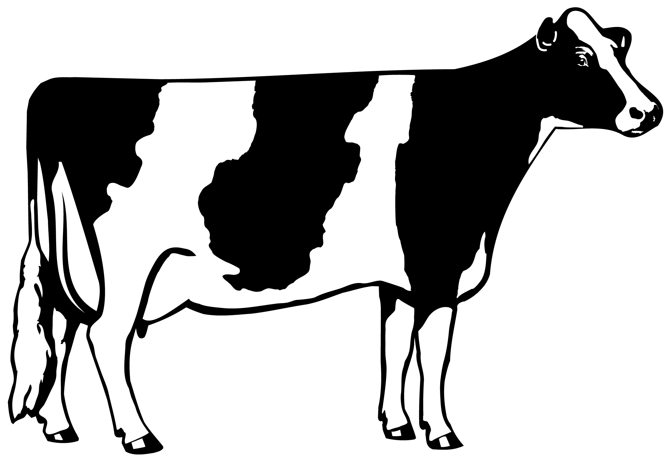 2310x1590 Head Clipart Black Cow