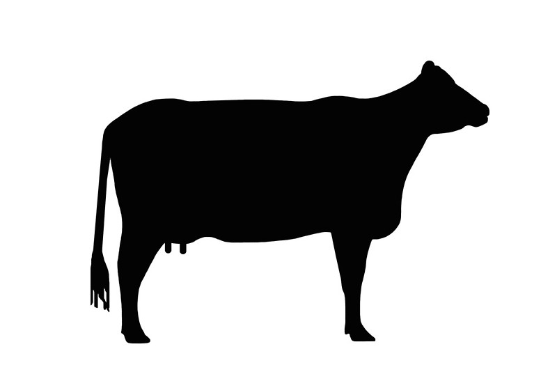 800x534 Cow Silhouette As Sign Or Clipart Canvas Prints By Naturaldigital
