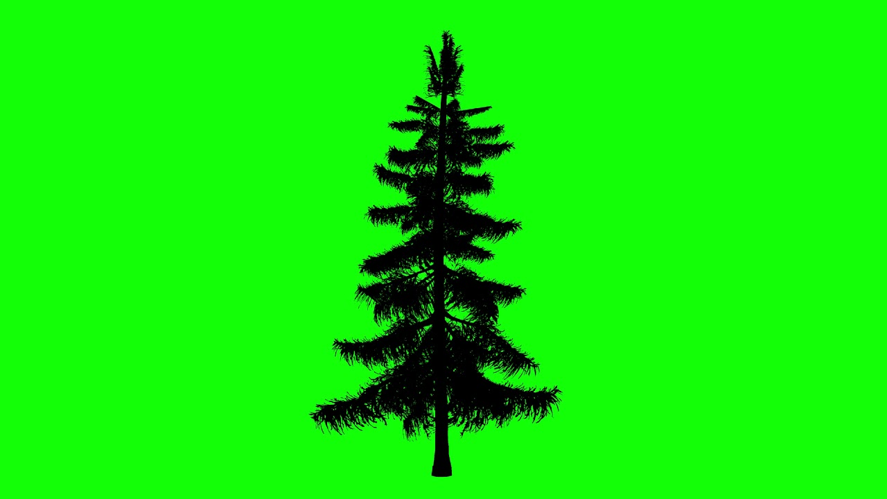 1280x720 Free Hd Video Backgrounds Animated Alaska Cedar Tree Silhouette