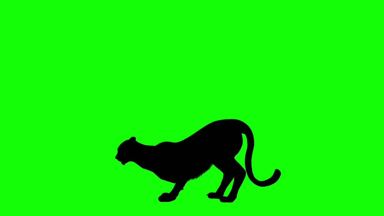 1280x720 Free Hd Video Backgrounds Cheetah Silhouette Eating On Green