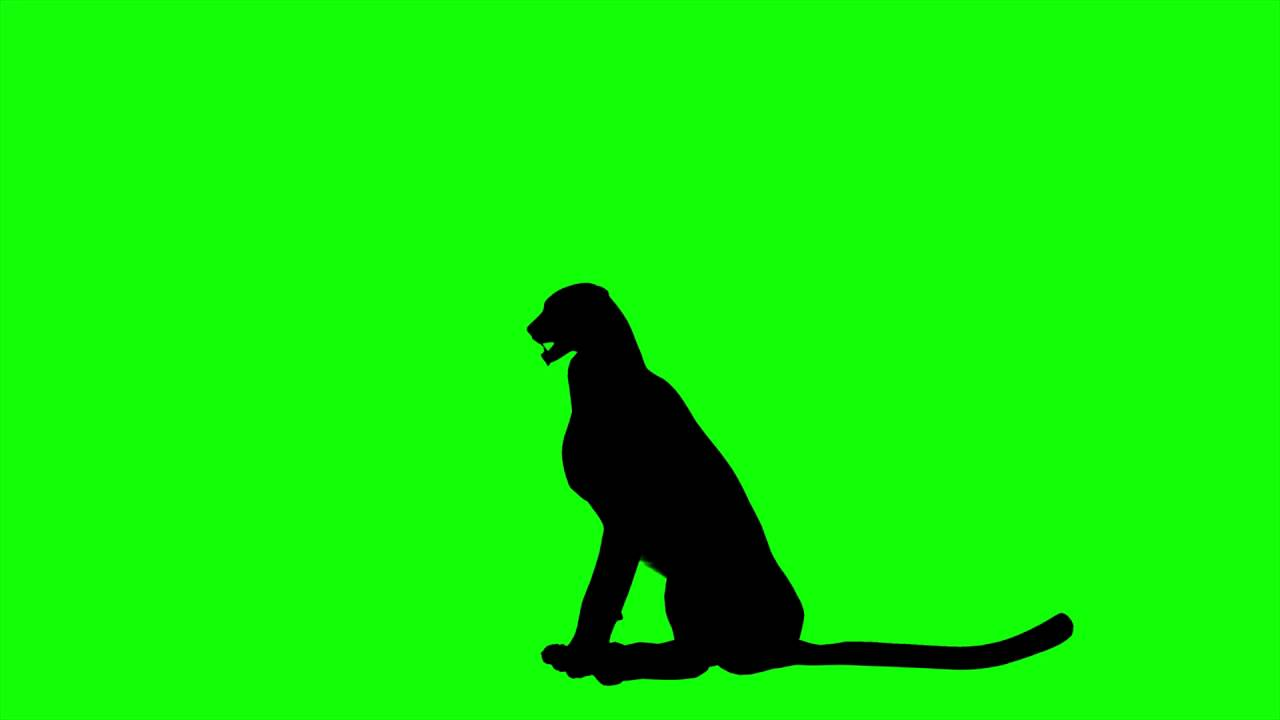 1280x720 Free Hd Video Backgrounds Cheetah Silhouette Idle Sit On Green