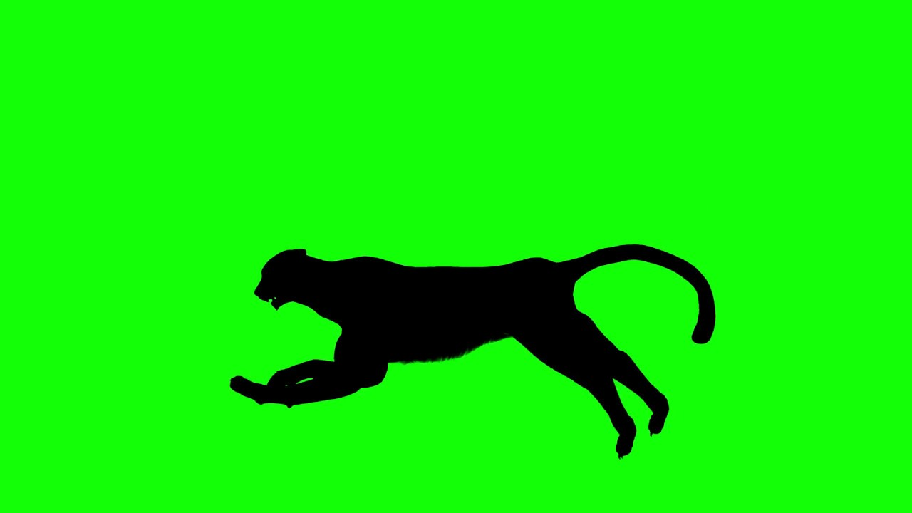 1280x720 Free Hd Video Backgrounds Cheetah Silhouette Running On Green