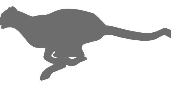 595x304 Cheetah, Physical, Fast, Debauched, Animal, Silhouette, Run, Track