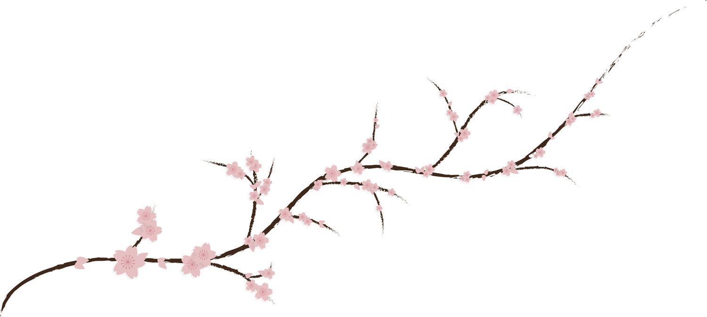 1500x672 Cherry Blossom Branch Clipart