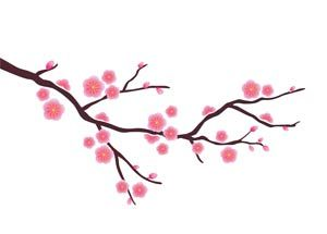300x215 Chinese Blossom For The Home Chinese Blossom
