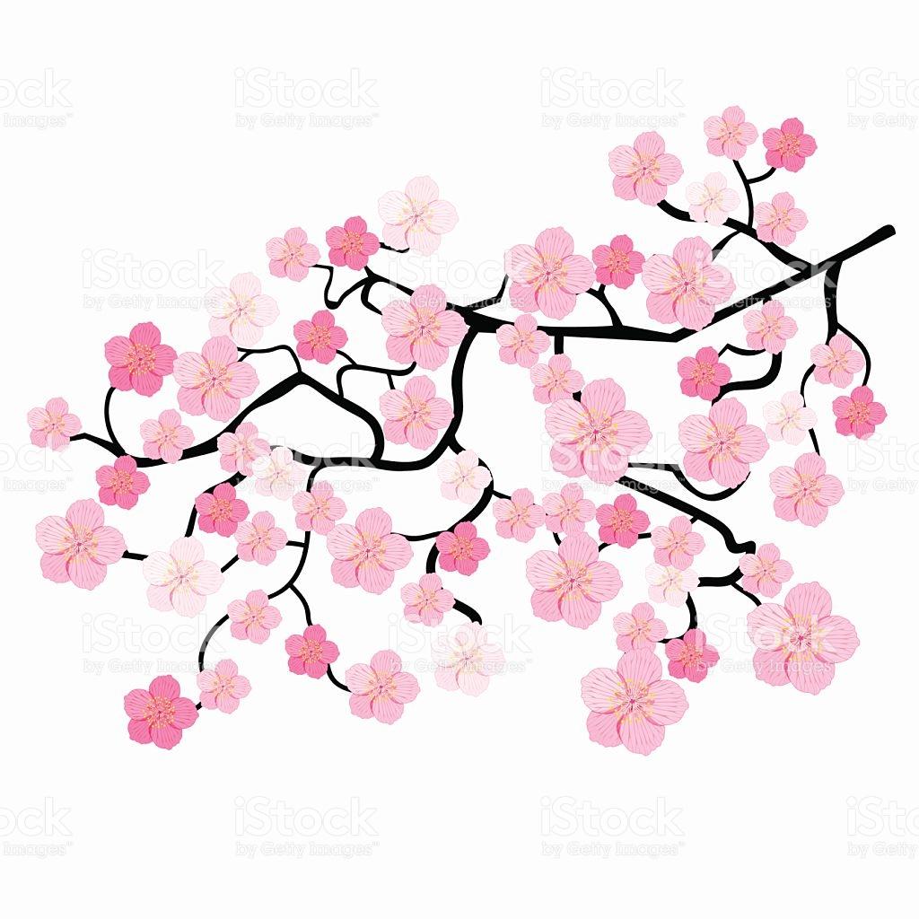 1024x1024 Blossom Clipart Japanese Cherry Blossom