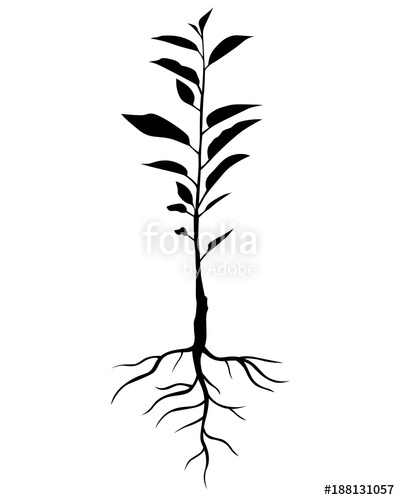 400x500 Silhouette Annual Cherry Tree Seedling Stock Image And Royalty