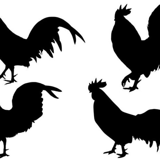 650x650 Chicken Silhouette Archives My Graphic Hunt