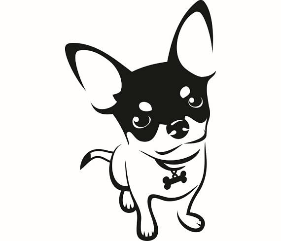 570x489 Chihuahua 1 Dog Breed K 9 Animal Pet Hound Lap Teacup Puppy